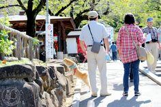 Oravanpesä: Japani 2013, Kawagoe, Kitain