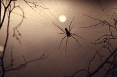 spiderweb iIn the light of the silvery moon