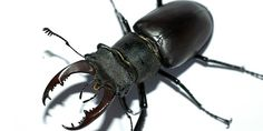 Discover & learn about types of beetle insects.