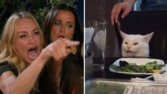 "The ""Woman Yelling at Cat"" meme is a mashup of two lesser memes—""Taylor Armstrong Crying and Pointing"" and ""Confused Cat at Dinner"". Crying Meme, Cat Crying, Crying Girl, Woman And Cat Meme, White Cat Meme, Taylor Armstrong, Cat Template, Templates, Funny Cat Memes"