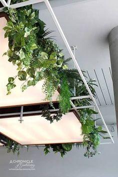 houseplants suspended overhead