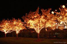 wedding lights in trees Moon Light Holiday Lighting Tree Lighting, Holiday Lights, Moonlight, Trees, Ceiling Lights, Wedding, Decor, Valentines Day Weddings, Decoration