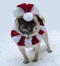 Bailey Puggins Christmas Santa Pug                                                                                                                                                                                 More