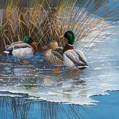 Three ducks on ice Canvas Art - Jan Weenink x Art Canard, Canard Colvert, Wildlife Paintings, Wildlife Art, Hunting Art, Coyote Hunting, Pheasant Hunting, Turkey Hunting, Archery Hunting