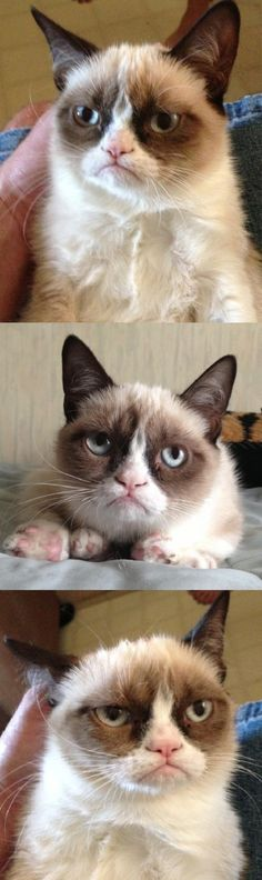 grumpy cat. I'll bet his mama warned him that if he wasn't careful, his face would freeze like that.  Listen to your mamas.