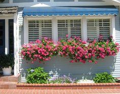 628 best Geraniums images on Pinterest | Geraniums ...