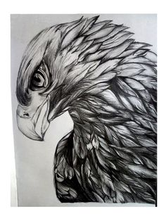Realistic Animal Drawings, Pencil Drawings Of Animals, Design