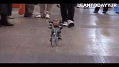 PRIMER-V2 Robot ile tanışın: Kendileri harika bisiklet kullanıyor #robot #teknoloji #bisiklet #çocuk