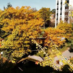 """""""Pretty view from the top of the York Lanes"""" School Photography, Seasons, York, Fall, Pretty, Instagram, Autumn, Fall Season, Seasons Of The Year"""