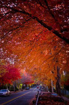 New England foliage, Gorgeous, Boston, Massachusetts.