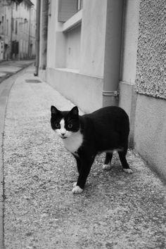 Tous le monde voudrait devenir un cat.