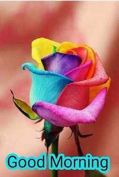 Good Morning Love Messages, Good Morning Happy, Good Morning Photos, Morning Wish, Happy Holi Images, Morning Flowers, Morning Quotes, Eye Candy, Catfish