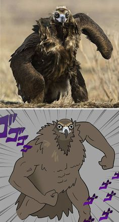 10 Times People Thought They Were Seeing Buff Animals, But They Were Optical Illusions - FilesDaddy Funny Video Memes, Funny Relatable Memes, Dankest Memes, Funny Jokes, Hilarious, Anime Meme, Pet Anime, Funny Animal Memes, Funny Animals