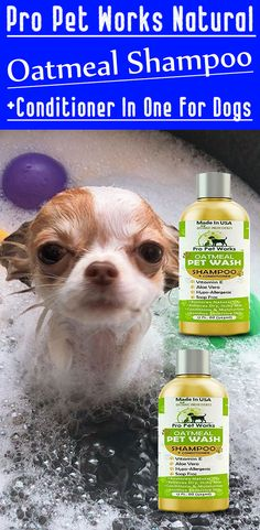 Our Oatmeal Dog Shampoo And Conditioner is recommended by Vets and Specially formulated for pets with allergies to food, grass and flea bites. Oatmeal Shampoo, Cat Shampoo, Shampoo And Conditioner, Dog Smells, Natural Vitamin E, Flea Treatment, Dog Eyes, Biodegradable Products, Allergies