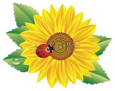 vector sunflower and red ladybird