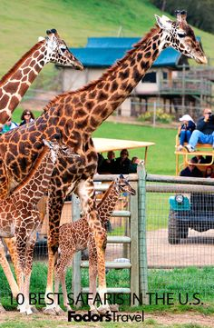 An African safari may be on most people's travel bucket lists, but for wildlife viewings closer to home (and at a fraction of the cost), consider an American safari. #travel #familytravel #animals #safari