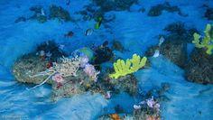 PÁGINAS AO VENTO: Incrível recife de corais na Foz do Rio Amazonas m...