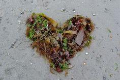 Seaweed heart.