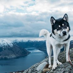 Meet Henrik @Vikse, the 28-year-old, who quit his job to backpack #Norway with his #husky - link in our bio @Playboy