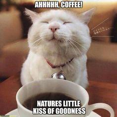 Celebrate Morning Coffee Meme's | 100+ ideas on Pinterest | coffee meme, coffee, coffee humor