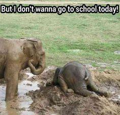 Elephant Tantrum. My house, every weekday morning!