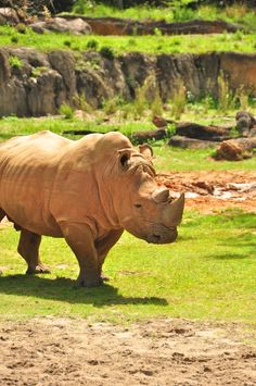 Disney's Animal Kingdom, @jo Woodard I know you cannot wait to see the rhinos tomorrow at Animal Kingdom :) this is a great way to end Christmas break!