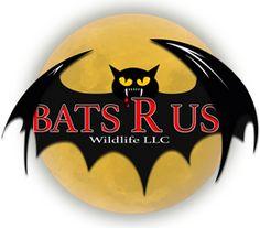 Bats R Us Wildlife | #1 Bat Removal Service | Connecicut's Best Animal Control Service | Bat Specialist Bethel, CT 06801 Removal Services, Animal Control, Bats, Wildlife, How To Remove, Animals, Animales, Animaux, Animal