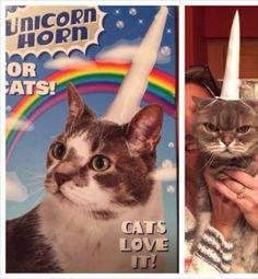 SiempreSarcastico #gato #humor #risas