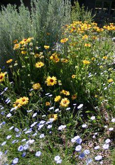 Montana Native Plants at Blake Nursery Small Trees, Plants, Xeriscape Plants, Native Plant Gardening, Native Plant Landscape, Wild Flowers, Perennials, Clematis, Dream Backyard