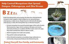 Help Control Mosquitoes that spread dengue, chikungunya, annd zika viruses