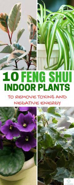 feng shui indoor plants