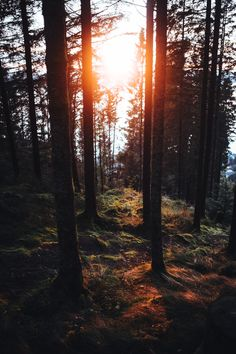 Sunset in the in the Forrest above Bergen Norway [OC] [1000x1500]