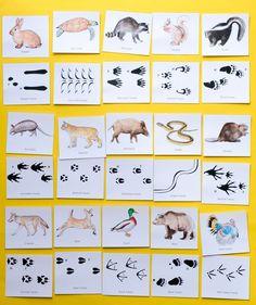 Animal Tracks: Printable Game for Kids animal tracks printable memory game Category: Animal Games & Printables. Printable Games For Kids, Memory Games For Kids, Pet Games For Kids, Guessing Games For Kids, Animal Crafts For Kids, Animals For Kids, Animal Activities For Kids, Straw Activities, Craft Activities