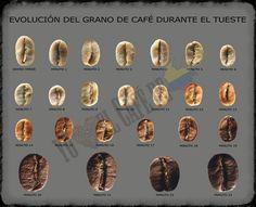 EVOLUCIÓN MINUTO A MINUTO DEL GRANO DE CAFÉ DURANTE EL TUESTE