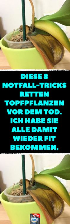 8 Notfall-Tricks für kranke Zimmerpflanzen These 8 emergency tricks save potted plants from death. I got them all fit again. 8 emergency tricks for potted plants.