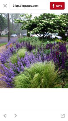 116 Best Garden Border Plants Images In 2020 Plants Garden