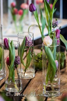 Flowering bulb plants look so beautiful in glass containers