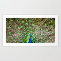 Peacock II Art Print by Ann B. - $15.00