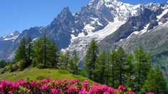 Landscapes: Mountain Snow Beauty Flower Nature Snowy Flowers Hd ...