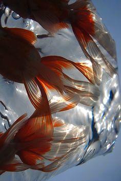 fukuro kingyo / bag of goldfish Aesthetic Photo, Aesthetic Pictures, Music Aesthetic, Sonne Illustration, Aesthetic Iphone Wallpaper, Aesthetic Wallpapers, Japanese Goldfish, Foto Fantasy, Foto Fashion