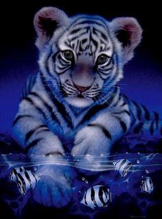 Pretty White Tiger Cub Set in Blue. Baby Tigers, Cute Tigers, Tiger Drawing, Tiger Art, Tiger Painting, Tiger Tiger, Bengal Tiger, Tiger Fish, Tiger Cubs