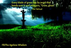 """Every blade of grass has its angel that bends over it and whispers, """"Grow, grow."""" ~ The Talmud"""