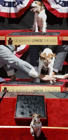 """Uggie, star of the movie """"The Artist"""""""