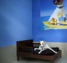 dog restroom