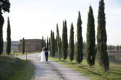 They take a moment for themselves - the lovely cypress tress are a symbol of Tuscany in Italy