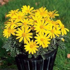 Um jardim para cuidar: Arbustos floridos para a primavera !