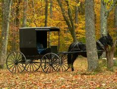 #Amish horse and buggy in #Autumn woods