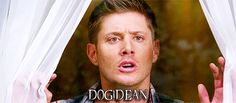 Lol Dog!Dean #what?! #onlyonSupernatural
