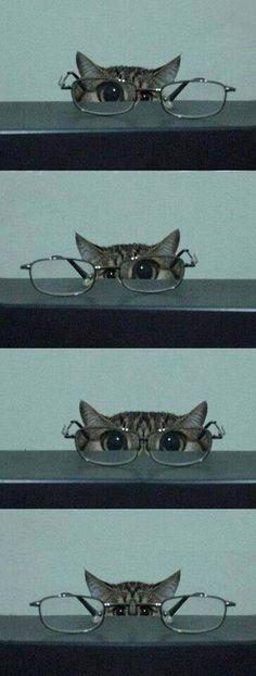 funny cat !