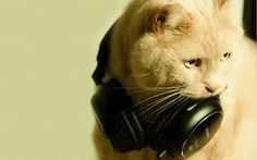 """Képtalálat a következőre: """"wallpaper music animals"""""""